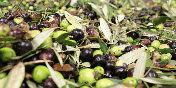 Huile Olive Toscane