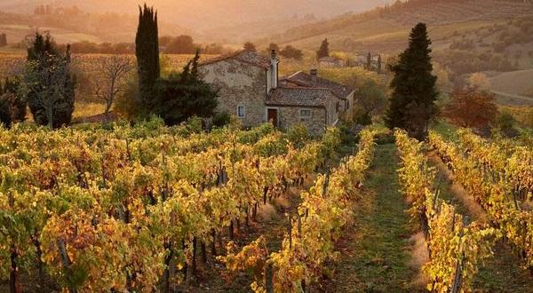 Vignes de Toscane
