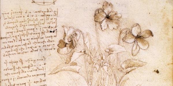 Botaniste Leonard de Vinci