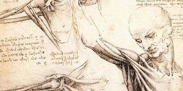 Anatomiste Leonard de Vinci