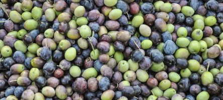 L'huile d'olive de Toscane