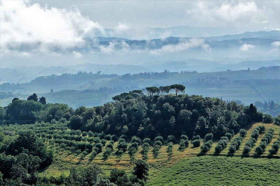 Oliveraie en Toscane